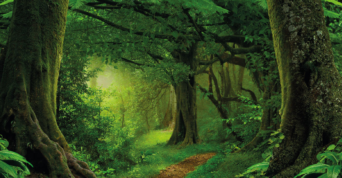 nwk_image-forest